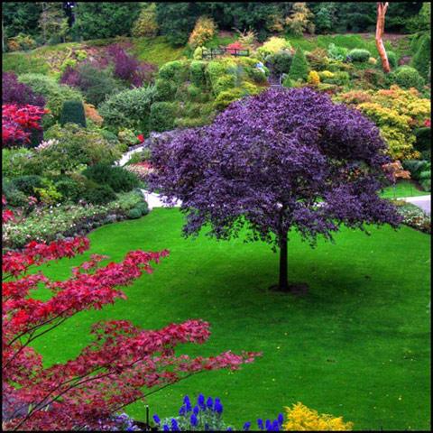 باغ جادویی در ونکور کانادا