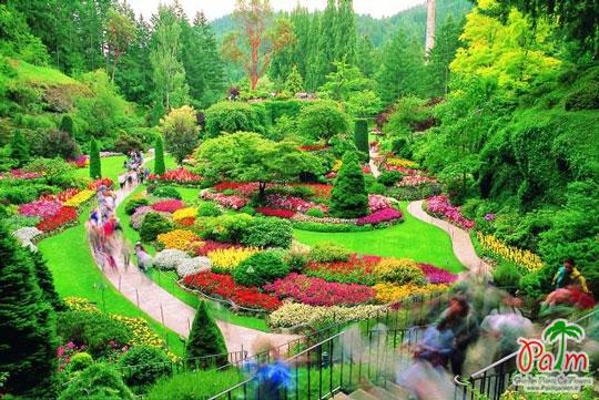 باغ امیری