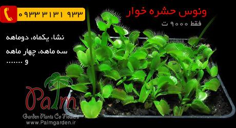 فروش گیاه زنده ونوس حشره خوار