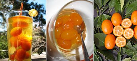 مصارف پرتقال کامکوات