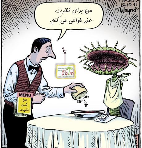 خرید بذر ونوس حشره خوار