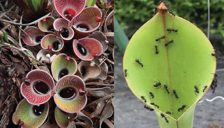 چرا گیاه حشره می خورد