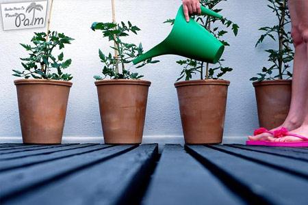 نحوه آب دادان گیاهان آپارتمانی