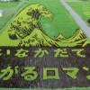 طرحهای زیبای مزارع برنج در چین