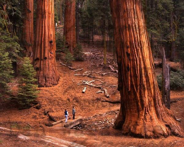 جنگل ملی سکویا، کالیفرنیا
