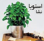 استویا | گیاه شیرین برگ