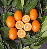 میوه های کامکوات