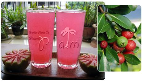 نوشیدنی گواوا قرمز Strawberry Guava
