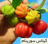 گیلاس سورینام Surinam cherry