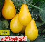 بذر گوجه فرنگی زرد گلابی