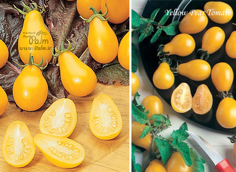 yellow-pear-tomato3