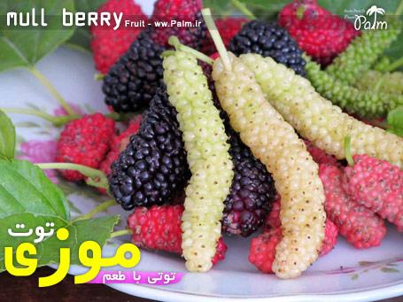 نهال توت موزی Mull berry