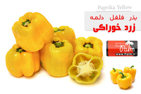 بذر فلفل دلمه زرد Paprika Yellow