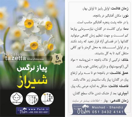 آموزش کاشت پیاز گل نرگس شیراز