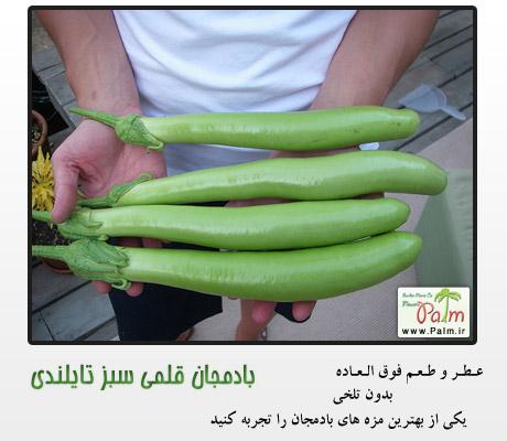 بذر بادمجان قلمی سبز تایلندی
