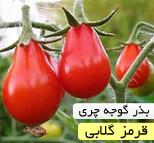 بذر گوجه فرنگی چری قرمز گلابی