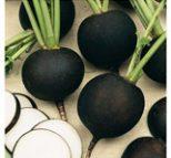 بذر تربچه اسپانیایی سیاه